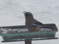 餌台の稼働により冬の癒しを得る人生