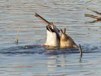 河川敷で鳥と虫を探す人生
