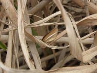 justSearchナガヒラタムシ ~材割の先に幼虫は見える~