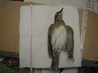 7か月目にして初の鳥