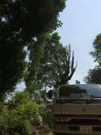 大きい楠の枝下し