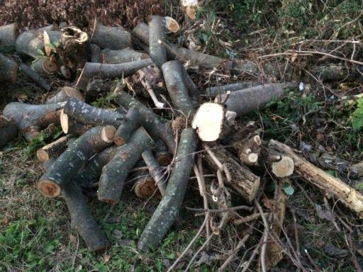 欅の薪あげます