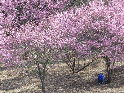 桜を撮るヒトを撮る