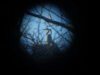 池畔にたたずむ9羽の青鋭