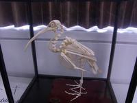 ラトビア人女性とイルカの解剖を見学