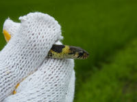 <(。ε゜)>Poison 毒蛇は見つかり続ける
