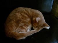 11月25日(火) マレの猫カフェ Le Cafe des Chats, Marais