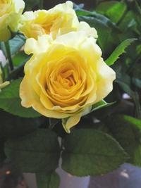 7月15日の切り花
