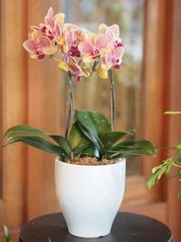 10月17日入荷の鉢花