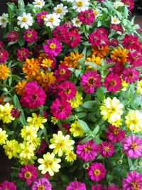9月27日の鉢花