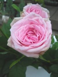 7月29日の切り花