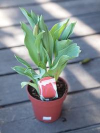 2月9日入荷の鉢花