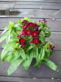 9月25日入荷の鉢花