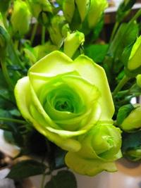 2月29日入荷の切り花