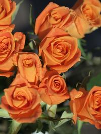 10月21日入荷の切り花