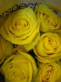5月22日入荷の切り花