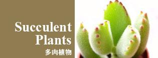 多肉植物 -Succulent Plants