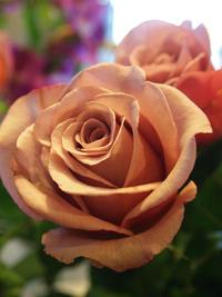 11月14日の切り花・鉢花