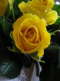 6月22日の切り花