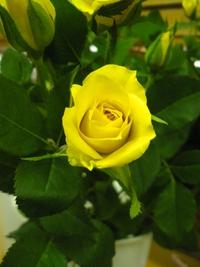 5月14日の切り花