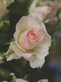 5月9日の切り花