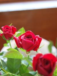 3月26日の切り花