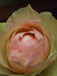 12月9日の切り花・鉢花