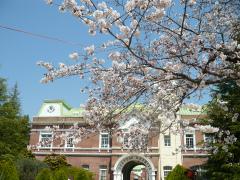 牛久★シャトー神谷の桜咲く