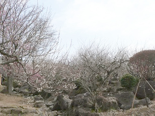 2014年筑波山梅林梅まつり その2 ―3/9(日)