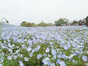 電車旅で、国営ひたち海浜公園の春の花を満喫