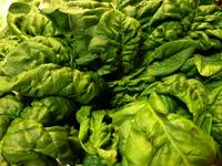 (75)早春の味♪ 寒締め白菜と縮みほうれん草のお浸し やりいかソテー添え
