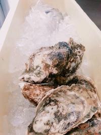 北海道産生牡蠣です コッコリーノ つくば