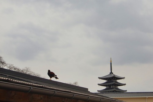 鷹と五重の塔