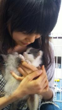 子猫を迎えました