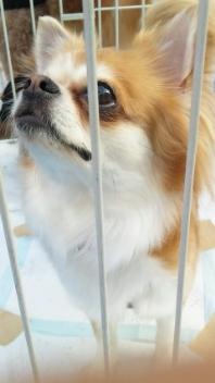 犬の譲渡会in 自由が丘
