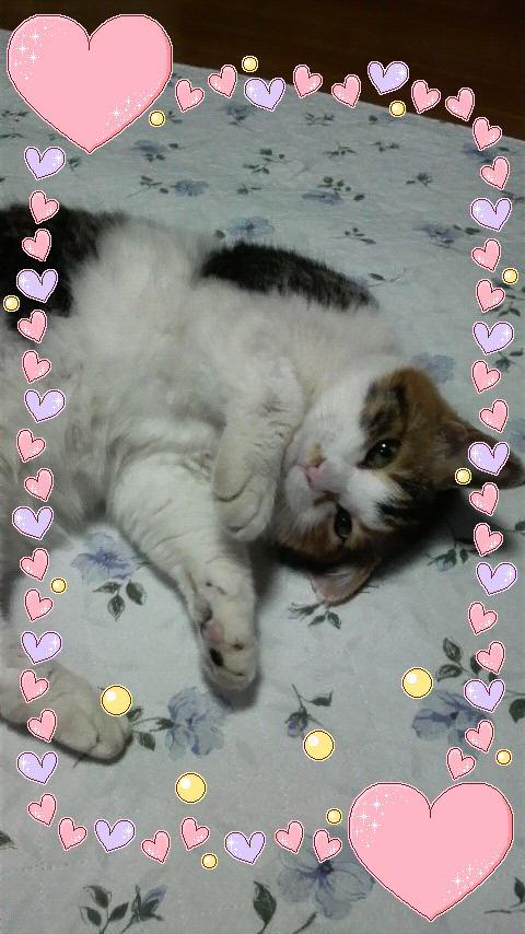 うちのネコ チーちゃん