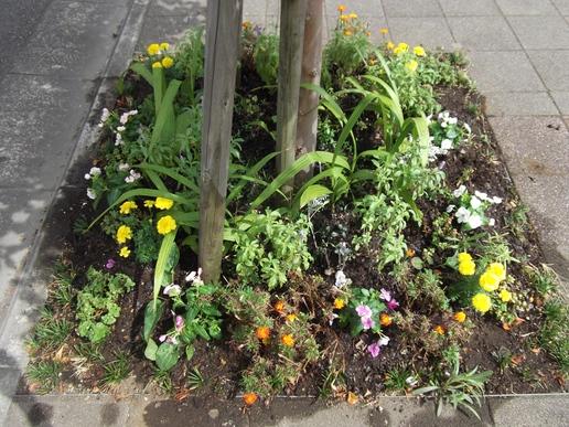 サーパス裏ととりせん裏の花壇の枯れている花を植え替えました!秋の植え替え時期まで花を咲かせて!!