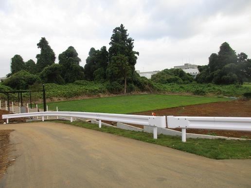 坂東太郎研究学園総本店横に建設中のドックサロン「ビークラブ」ドックランに芝生が貼られている!
