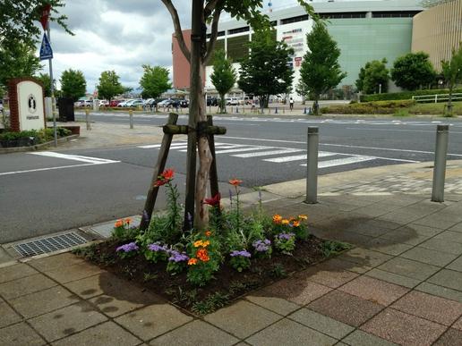 ポンパドウル沿いの花壇