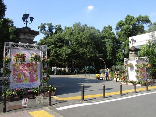 東京日比谷公園でガーデニングショーが開催されています。帰りは丸ブラを楽しみたいものです!