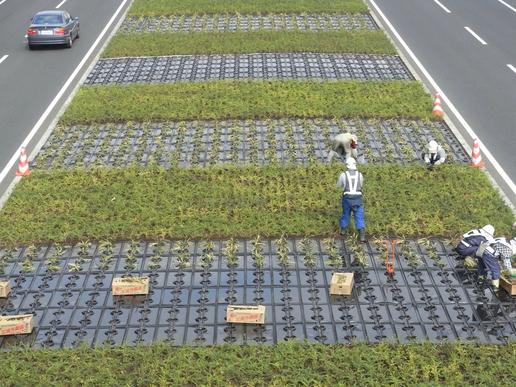 中央分離帯植栽作業