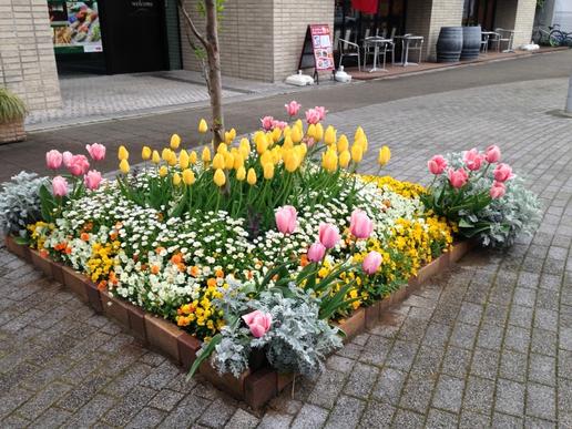 ベストランド花壇はいつも華やかです