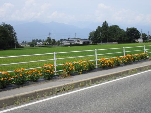 研究学園の幹線道路沿いに、いつかは素敵な花の帯を作りたいで~す!