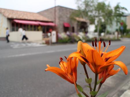 【さようなら!ポンパドウル第6弾】ポンパドウルと花のある風景!
