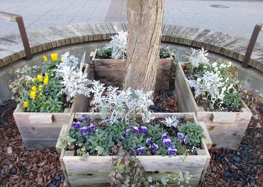 研究学園駅前で花のお手入れ中ツートンのかわいいトイプードルが!