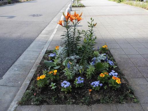 夏の花を植えました。