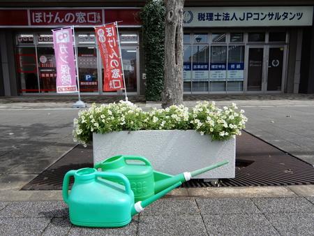 研究学園駅前の花達へ水やりしました!