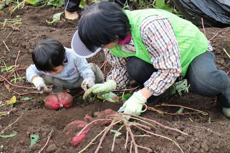 たくさんの子供達も参加しグリーンの会の畑の芋ほりを行いました!