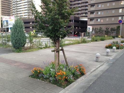 研究学園間近の飲食店ビル建設予定地が動きだした!その前の花壇は花盛りです!