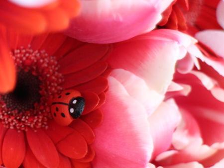 てんとう虫がついた花束を! 「ウィズガーデン」
